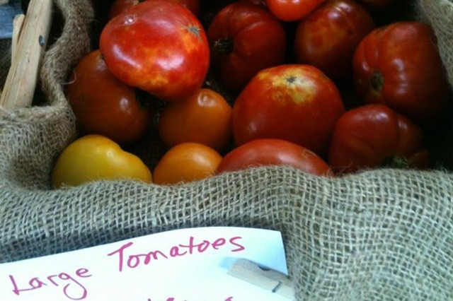 Big Heirloom Tomatoes from 2013